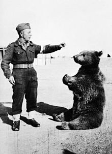 Wojtek - The Anders Army (WWII) Fighting Bear Gets A Monument !