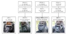 GorillaFamilyTree
